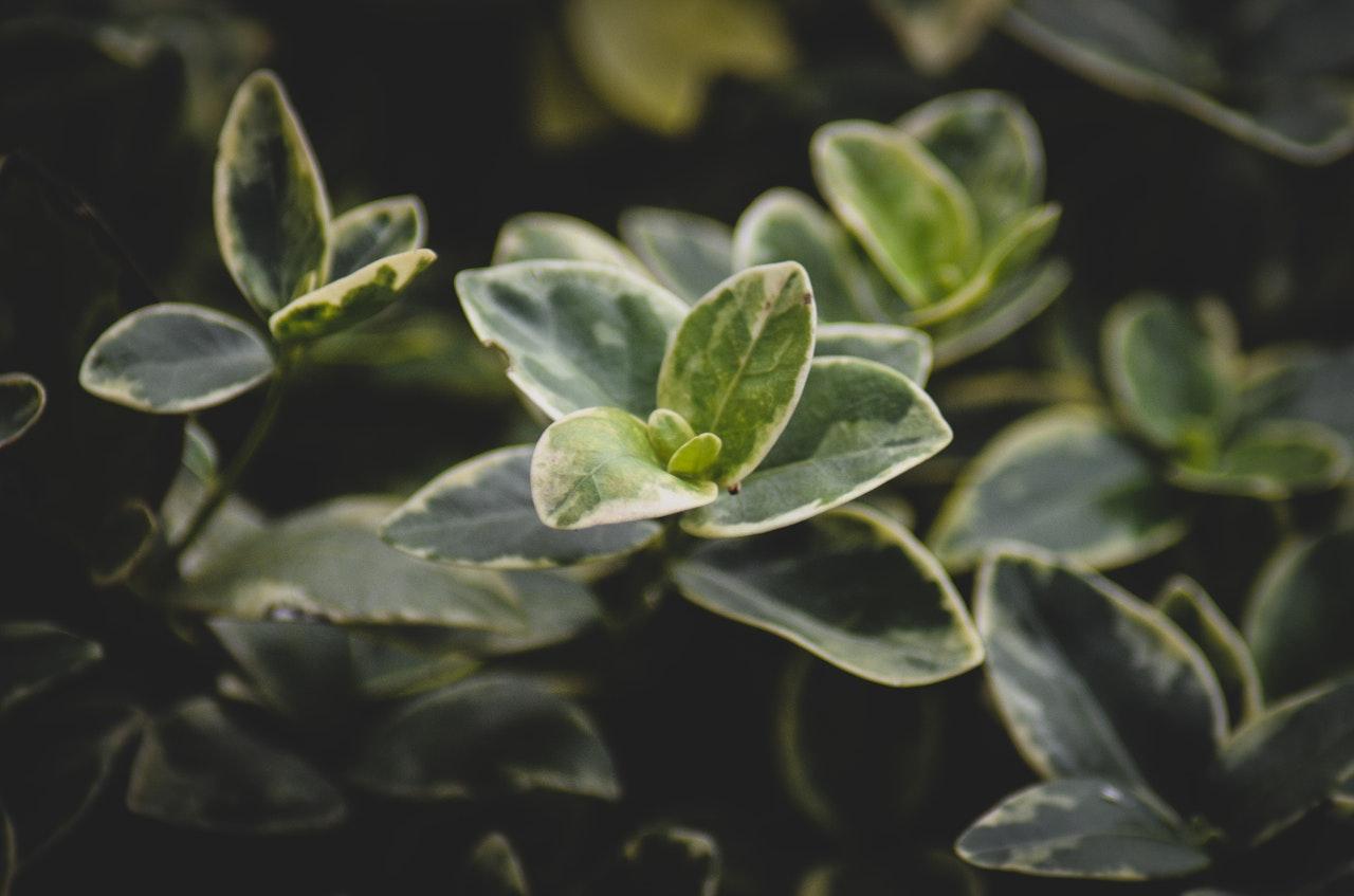 Wat is fotosynthese?